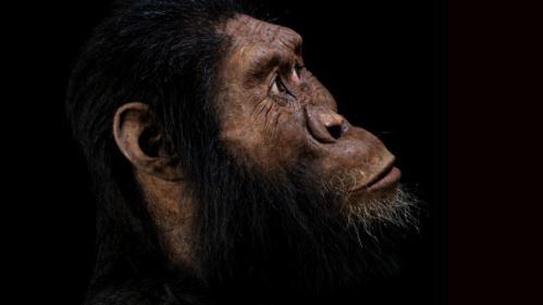 Un crâne vieux de 3,8 millions d'années donne un visage à une espèce ancienne d'australopithèque