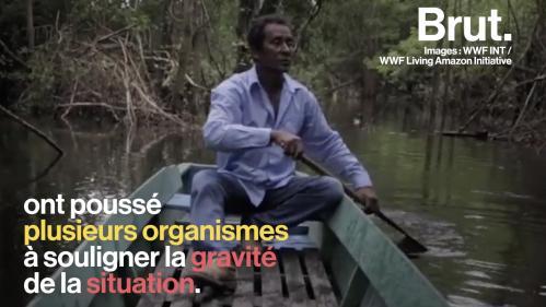 VIDEO. Quelles sont les conséquences des incendies en Amazonie ?