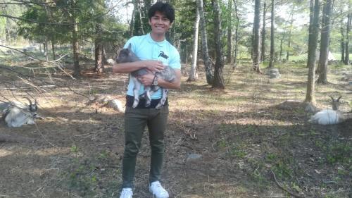 En Suède, des réfugiés afghans s'intègrent en gardant des chèvres et préservent la biodiversité