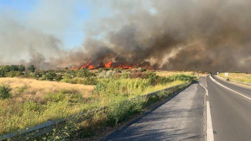 Hérault : un important incendie près de Sète brûle 300 hectares, plusieurs centaines d'habitations évacuées