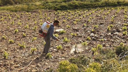 On vous explique la polémique autour de la consultation sur les pesticides