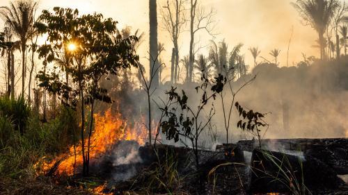 Amazonie : la violence envers les défenseurs de l'environnement alimente la déforestation au Brésil, selon Human Rights Watch