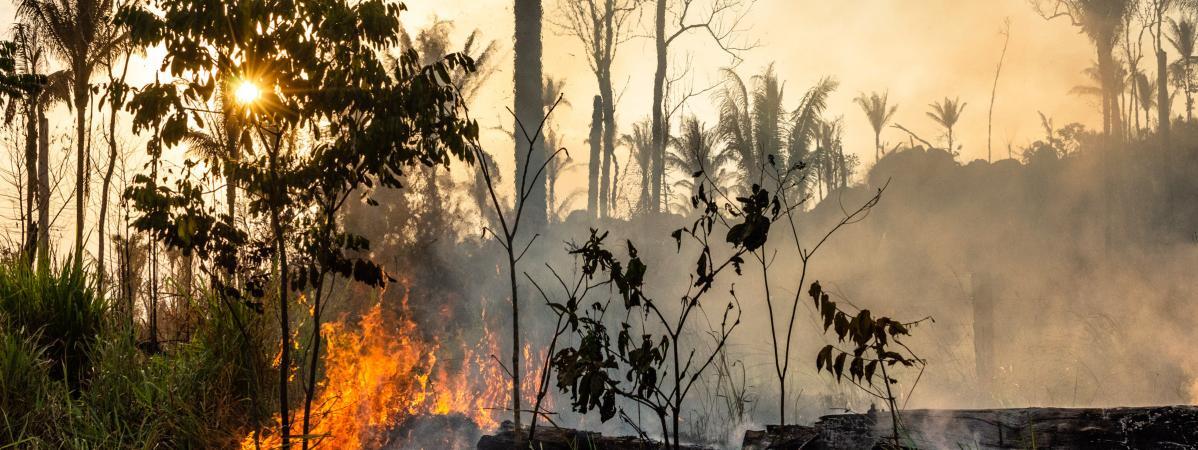 Amazonie : au Brésil, la violence envers les défenseurs de l'environnement alimente la déforestation