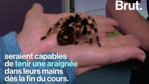 """VIDEO. """"Friendly Spider"""", le programme pour en finir avec la peur des araignées"""