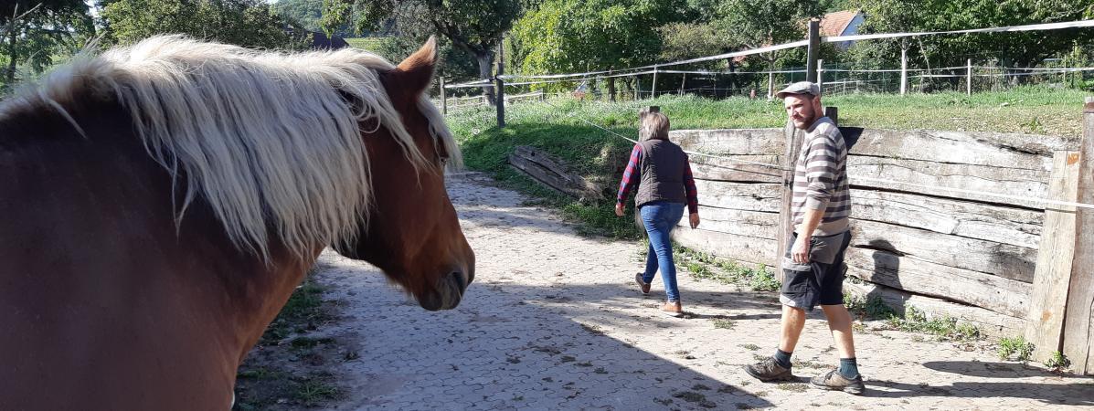Haut-Rhin : des viticulteurs attaqués en justice par des voisins incommodés par les odeurs de crottins de c...