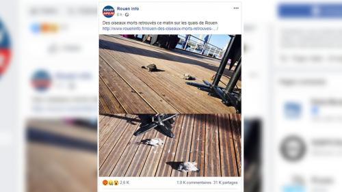Des oiseaux sont-ils morts à Rouen après l'incendie de l'usine Lubrizol?