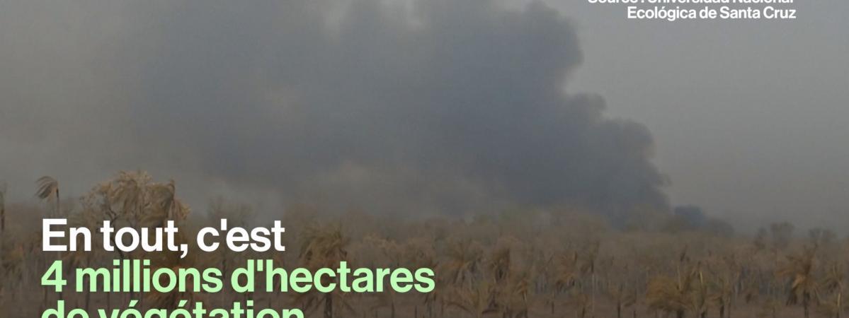 VIDEO. En Bolivie, 2,3 millions d'animaux sont morts dans les incendies