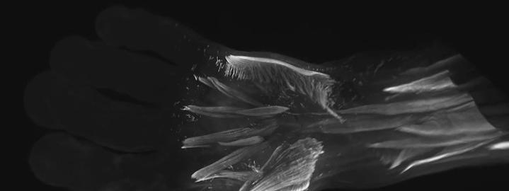 Des muscles de reptiles découverts dans les embryons