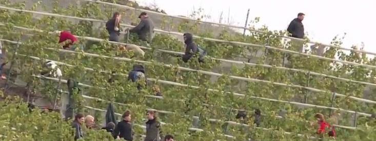 Pas-de-Calais : des vendanges ont eu lieu sur un terril