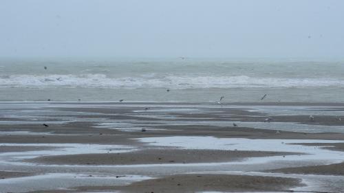 Pas-de-Calais : deux migrants retrouvés mort sur la plage du Touquet