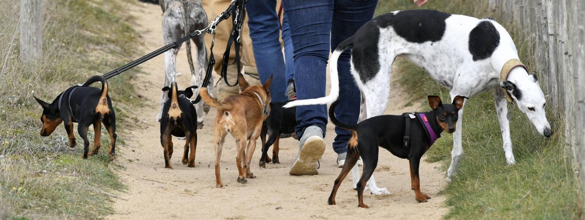 """La Fondation 30 millions d'amis réclame un statut de """"personne animale"""""""