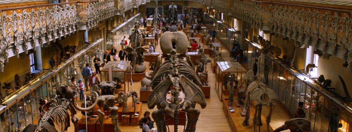 Les animaux mâles sont sur-représentés dans les muséums d'histoire naturelle