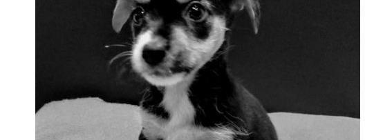 """Des internautes """"déclassifient"""" les photos de leurs chiens pour imiter Donald Trump"""