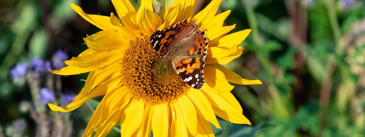 Biodiversité : trois choses à retenir sur la nouvelle étude alarmante sur la disparition des insectes