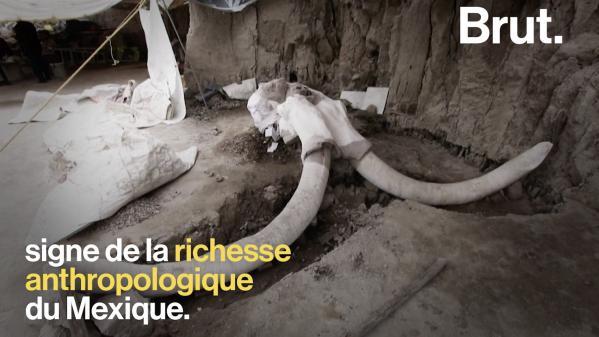 VIDEO. Au Mexique, les ossements de 14 mammouths ont été retrouvés dans une fosse