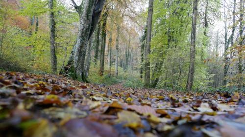 Ce que l'on sait de la mort d'une femme enceinte attaquée par des chiens dans une forêt de l'Aisne