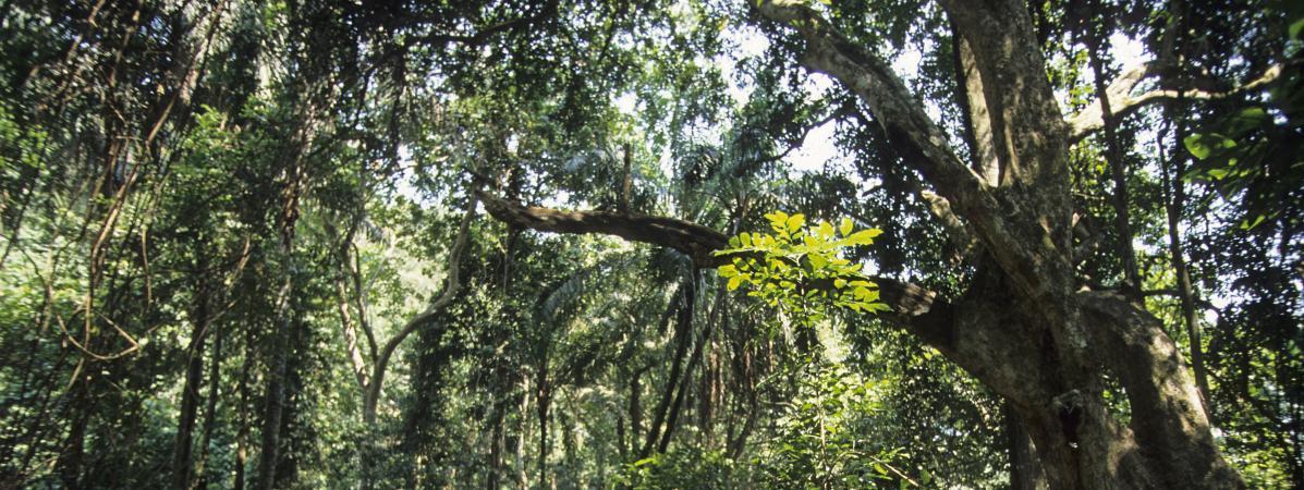 Un tiers des plantes tropicales africaines potentiellement menacées d'extinction, selon une étude