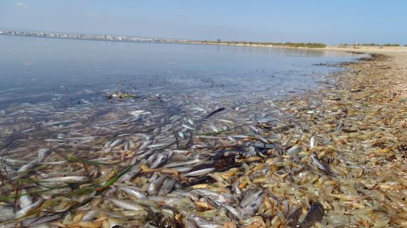 Des poissons morts dans la Mar Menor, en Espagne, le 13 octobre 2019.