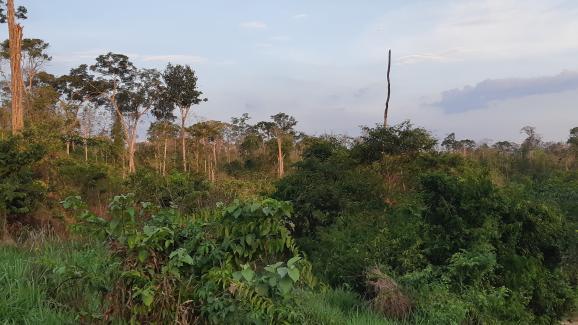 La forêt des Guajajara, territoire de l\'Arariboia, dans l\'Etat de Maranhao, au Brésil. Novembre 2019