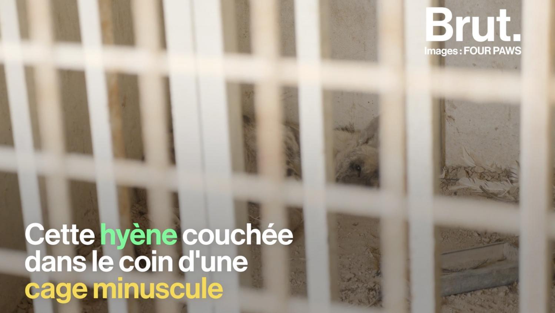 VIDEO. Au Liban, les animaux des zoos victimes de la crise qui secoue le pays