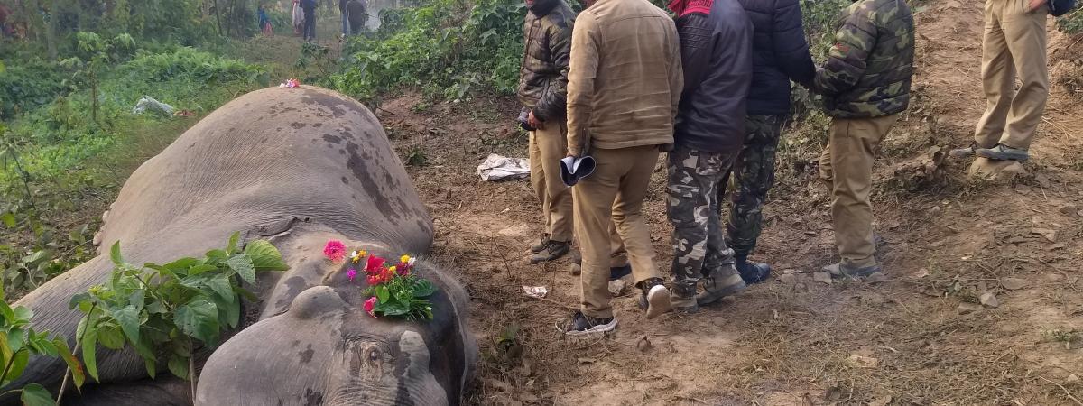Inde : deux éléphants tués par un train et incinérés