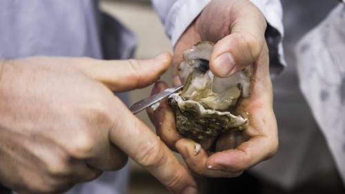 Charente-Maritime : trois hommes ont été interpellés pour avoir volé plusieurs tonnes d'huîtres