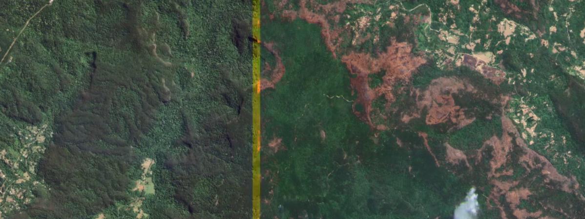 VIDEO. Australie : découvrez les forêts décimées par les incendies dans cet avant-après