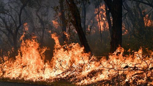 """Changement climatique : les """"méga-feux"""" en Australie vont-ils devenir la norme ?"""