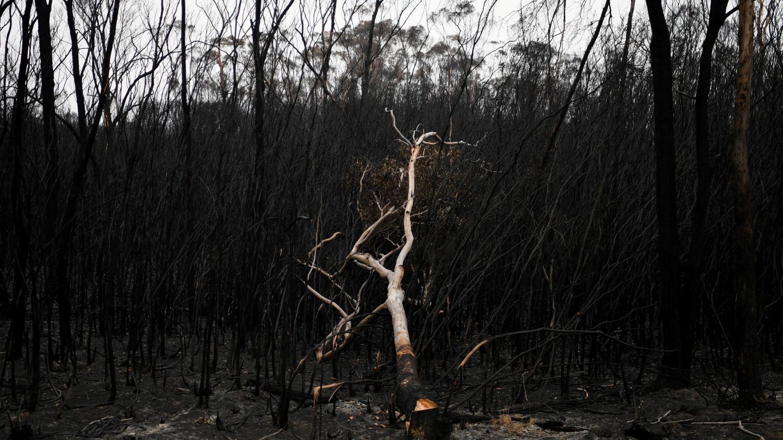 """Australie : le """"continent du feu"""" peut-il se remettre des incendies géants qui ont dévoré des millions d'hectares ?"""