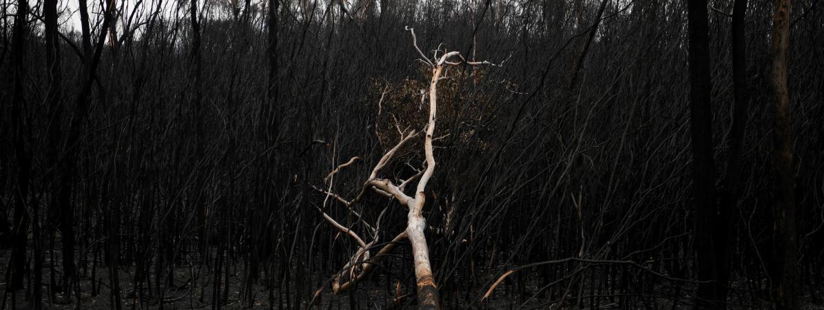 """Australie : le """"continent du feu"""" peut-il se remettre des incendies géants qui ont dévoré des millions d'he..."""