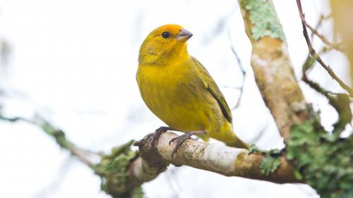Indre : un serial voleur de canaris interpellé, 63 oiseaux libérés