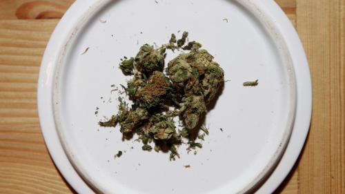 """L'expérimentation du cannabis thérapeutique prévue pour """"septembre"""" 2020, annonce l'Agence du médicament"""