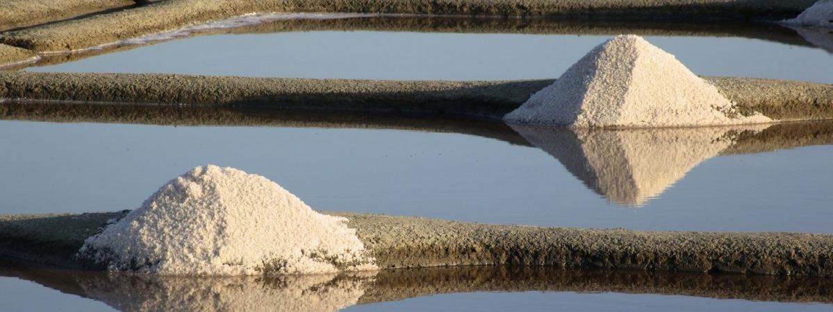 Plomb, pesticides, déchets médicaux : à Guérande, les marais salants sont menacés de toutes parts