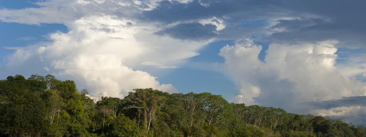 Perdus dans la forêt amazonienne, une mère et ses trois enfants ont survécu 34 jours