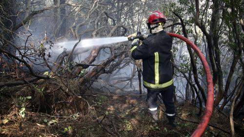 Corse : les pompiers demandent plus de moyens face à la multiplication des feux d'hiver