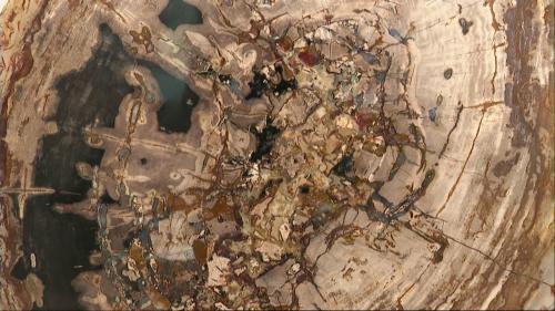 Ils transforment des arbres pétrifiés de 200 millions d'années en objets d'art