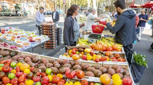 """Une """"très forte suspicion"""" de virus de la tomate dans une exploitation du Finistère, annonce le ministère de l'Agriculture"""