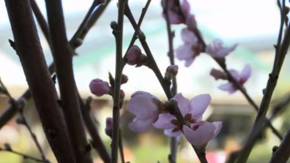 Météo : une floraison précoce