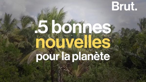 VIDEO. Le grand retour d'une espèce, fin des sacs plastique en Tunisie... 5 bonnes nouvelles pour la planète