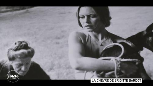 VIDEO. C'est une petite chèvre qui a décidé Brigitte Bardot de consacrer sa vie à la défense des animaux