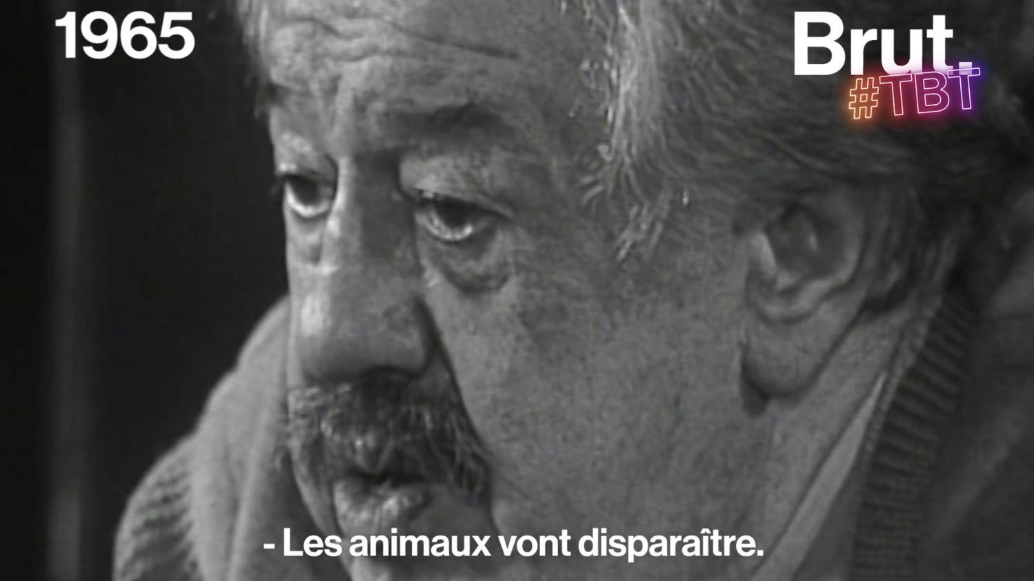 """VIDEO. """"Les animaux vont disparaître"""", lançait l'acteur Michel Simon en 1965"""