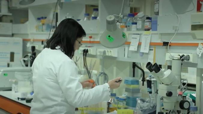 Coronavirus : à la recherche d'un vaccin