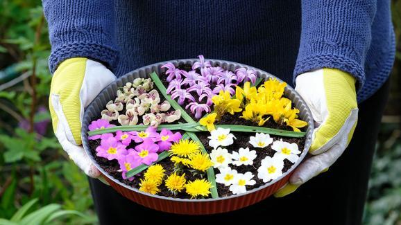 Pissenlit, primevères, forsythia, grappes d\'akébie et jacinthe pour le parfum.