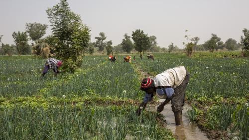 Le coronavirus, un nouveau fléau pour l'Afrique, où la crise alimentaire menace