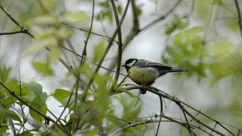 Oiseaux : avec le confinement, la nature reprend ses droits, même en ville