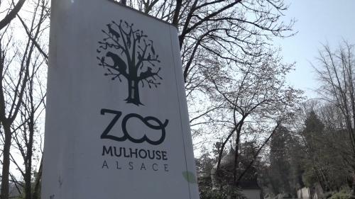 """VIDEO. """"Les soigneurs qui s'occupent des gibbons portent un masque"""" : le zoo de Mulhouse confiné prend ses précautions avec ces proches parents de l'homme"""