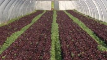 Agriculture : manque de main-d'oeuvre criantpour les récoltes