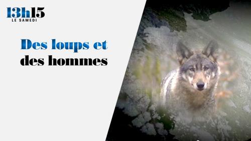 """""""13h15 le samedi"""". Des loups et des hommes"""