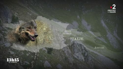 VIDEO. Le loup pourrait coloniser tout le territoire français dans les années à venir