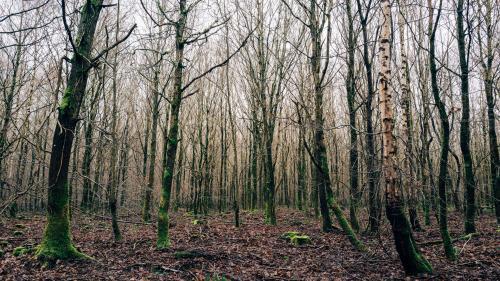 En Seine-et-Marne, les chasseurs ne pourront plus patrouiller dans les forêts pour faire respecter le confinement